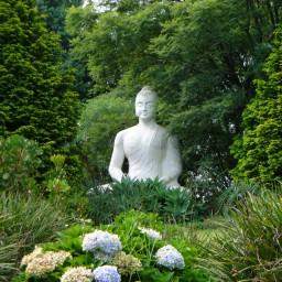 Buddha in Africa at BRC